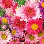 flores1_mat
